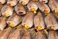 Free Dry Gourami Fish Royalty Free Stock Photography - 18884797