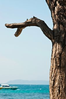 Dead Tree On The Sea Royalty Free Stock Image
