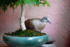 Free Bird In A Bonsai Pot Stock Photos - 18882493