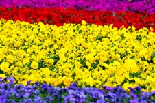 Free Spring Flowers Background Royalty Free Stock Images - 18882529