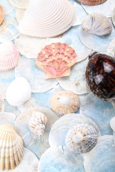 Free Bright Shell Selection Stock Image - 18885161