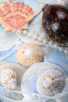 Pearly Shells Royalty Free Stock Image