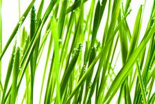 Free Green Grass Royalty Free Stock Photo - 18885585