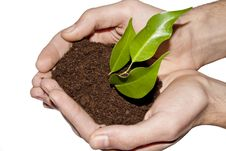 Free Plant In Hands Royalty Free Stock Photography - 18885877