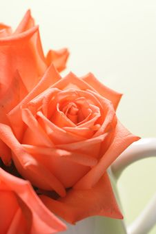 Free Rose Royalty Free Stock Photos - 18886648