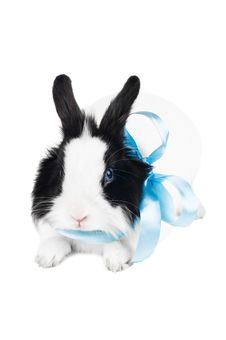 Free Rabbit With Blue Ribbon Stock Image - 18887801