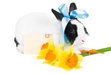 Rabbit With Blue Ribbon Royalty Free Stock Photography