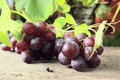 Free Red Grape Stock Photo - 18896710