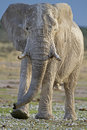 Free Elephant Bull Stock Photo - 18898770