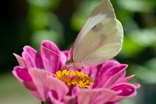 Free Butterfly On Flowers Royalty Free Stock Photography - 18892267
