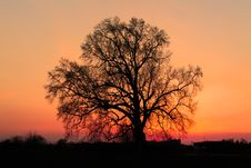 Free Beautiful Silhouette Of Tree Stock Image - 18893001