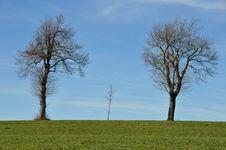 Three Trees At Horizon Stock Photography