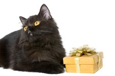 Free Black Persian Cat Stock Photos - 18895493