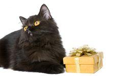 Black Persian Cat Stock Photos