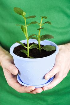 Free Closeup Of Mans Hands Holding Potted Plant Stock Image - 18895751