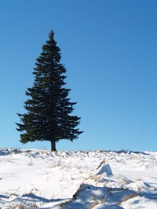 Serenity Tree In Winter Stock Photography