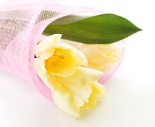 Free Tulips Bouquet Stock Photography - 18896672