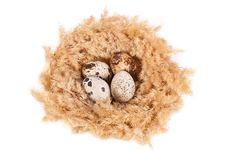 Free Quail Eggs In A Nest Stock Photography - 18896812