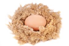 Free An Egg In A Nest Stock Image - 18896891