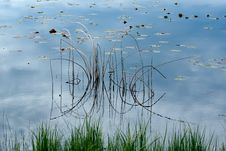 Free Reed Reflections Stock Images - 18897234