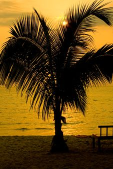 Free Silhouette Of Palm Trees Royalty Free Stock Photo - 18897525