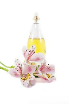 Free Perfume And Scent Royalty Free Stock Photo - 18898885