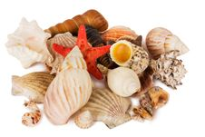 Free Seashells Royalty Free Stock Images - 18899779