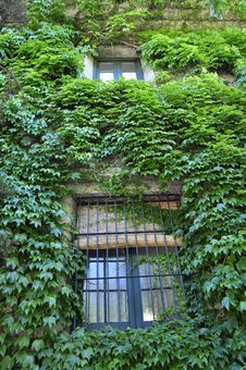 Free Window On A Wall With Creepers Royalty Free Stock Image - 18899886