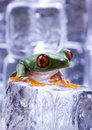Free Cold Frog Royalty Free Stock Photography - 1890437