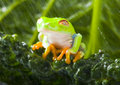 Free Wet Frog Stock Photography - 1890772