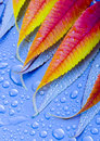 Free Wet Leaves Stock Photography - 1893712