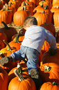 Free Pumpkin Climbing Stock Photography - 1896312
