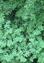 Free Lush Foliage Stock Image - 1896641
