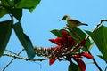 Free Humming Bird Stock Photo - 1897550