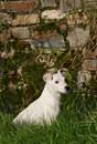Free Jack Russell Royalty Free Stock Image - 1899846