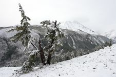 Free White Wood, Snow And Mountains Stock Images - 1891894