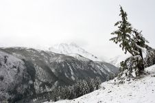 White Wood, Snow And Mountains. Royalty Free Stock Image