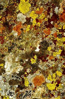 Free Lichen 1 Stock Image - 1892321