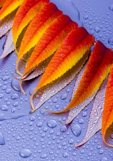 Free Wet Leaves Royalty Free Stock Photo - 1893715