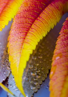 Free Colourful Leaves Royalty Free Stock Photos - 1893768