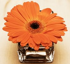 Free Gerbera Flower. Royalty Free Stock Photography - 1894217