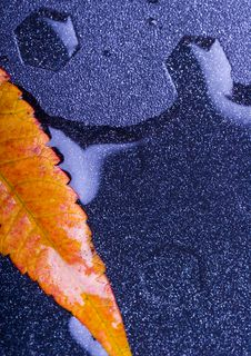Free Wet Leaves Royalty Free Stock Photos - 1894228