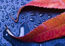 Free Wet Leaves Stock Images - 1894264