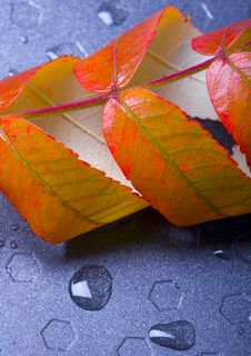 Free Wet Leaves Royalty Free Stock Photos - 1894278