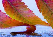 Free Wet Leaves Royalty Free Stock Images - 1894319
