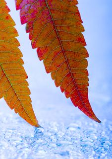 Free Leaves Stock Photos - 1894373
