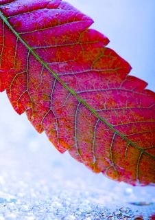 Free Leaf Stock Photography - 1894382