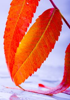 Free Colourful Leaves Stock Images - 1894384