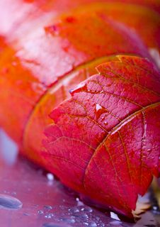Free Colourful Leaves Royalty Free Stock Photo - 1894425