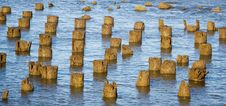 Free Old Piling Stumps In New Your Harbor Royalty Free Stock Photo - 1894695